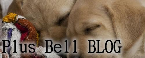 PlusBell Blog