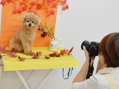犬の写真撮影